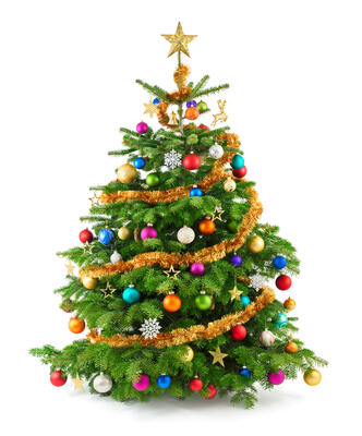 Can a Co-op Ban Christmas Trees?
