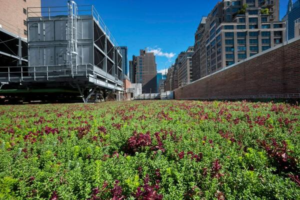 Green roof at Fashion Institute of Technology by Greensulate
